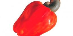 grupo-canela-alimentos-produtos-caju-2020