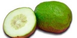 grupo-canela-alimentos-produtos-cidra-2020