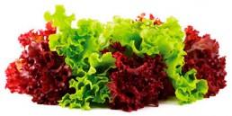 grupocanelas-verduras-alface-2020