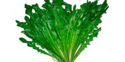 grupocanelas-verduras-almeirao-2020