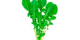 grupocanelas-verduras-catalonia-2020
