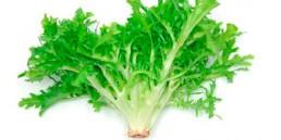grupocanelas-verduras-chicoria-2020