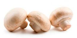 grupocanelas-verduras-cogumelo-2020