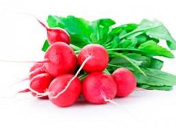 grupocanelas-verduras-rabanete-2020